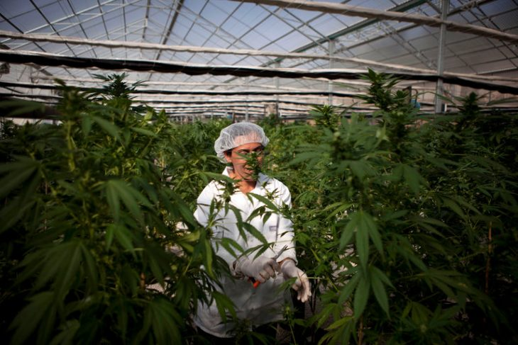 Israeli Cabinet Makes Move to Decriminalize Recreational Marijuana Use