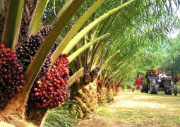 Prime-Minister Tun Mahathir says: Retaliation inevitable if EU continues to treat palm oil industry unfairly