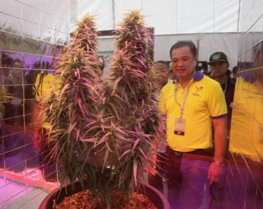 Pot enthusiasts celebrate first weed fair  in Thailand