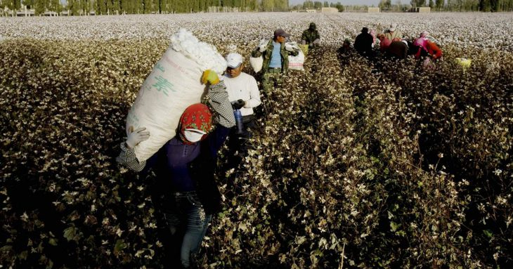 New US sanctions against China: ban on  cotton imports from XPCC over Xinjiang 'slave labor'